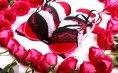 Zo scoor jij een mooi valentijnscadeau; gouden lingerietips voor mannen!