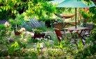 Hoe je tuin budgetvriendelijk inrichten?