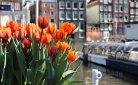 Op bezoek bij de buren: negen Nederlandse zomeruitstapjes