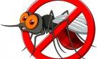 Muggen plagen en jagen voor een prikkie