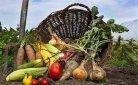 Biologisch tuinieren: 'lekker voordelig natuurlijk'?