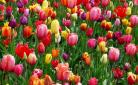 Zo bereid je je tuin voor op de lente