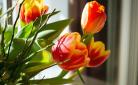 4 manieren om de lente goedkoop in huis halen