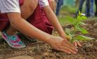 Bespaar jezelf een hoop geld en werk: plant in het najaar