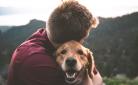 Je huisdier een zalig leven bezorgen kan ook goedkoop